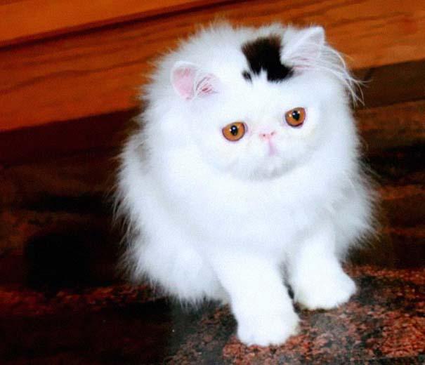 Γάτες που έγιναν διάσημες χάρη στα σημάδια της γούνας τους (4)