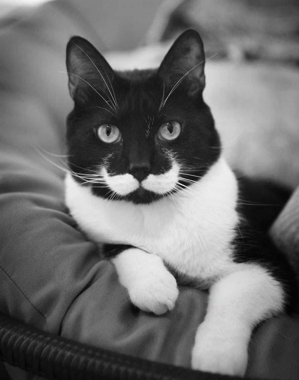 Γάτες που έγιναν διάσημες χάρη στα σημάδια της γούνας τους (6)