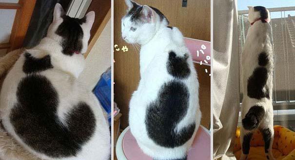 Γάτες που έγιναν διάσημες χάρη στα σημάδια της γούνας τους (12)