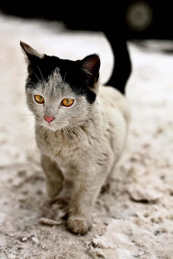 Γάτες που έγιναν διάσημες χάρη στα σημάδια της γούνας τους (8)