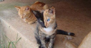 10 γάτες που έγιναν διάσημες χάρη στα σημάδια της γούνας τους