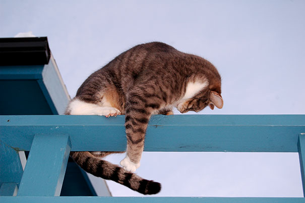 Γάτες που προσπαθούν να πιάσουν την ουρά τους