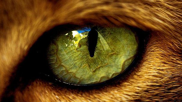 Μάτι Γάτας