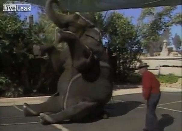 Μνήμη ελέφαντα