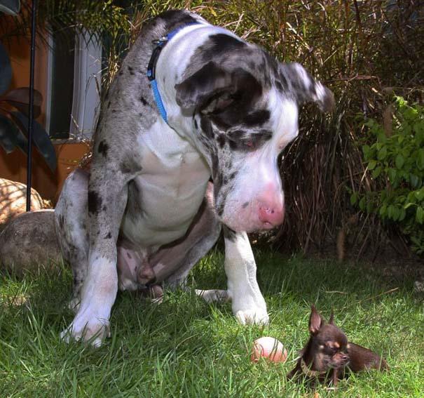 Ο μικρότερος σκύλος στον κόσμο (6)