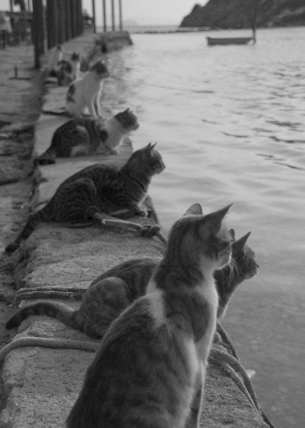 Περιμένοντας την επιστροφή των ψαράδων | Φωτογραφία της ημέρας