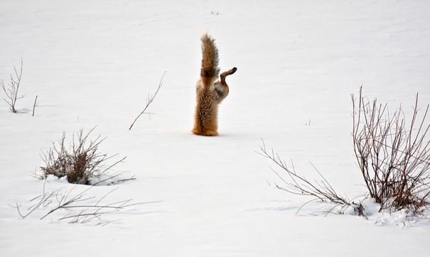 Κυνήγι στο χιόνι | Φωτογραφία της ημέρας