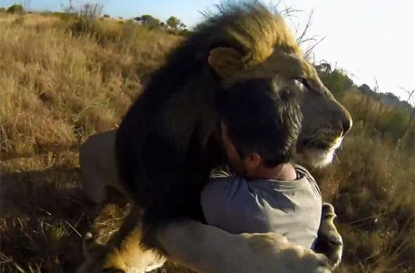 Πρωινές αγκαλιές με... λιοντάρια