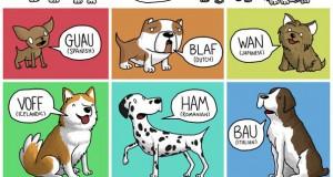 Πως ακούγονται τα ζώα σε διαφορετικές γλώσσες
