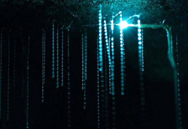 Πυγολαμπίδες δημιουργούν μοναδικό θέαμα σε σπήλαια της Νέας Ζηλανδίας (3)