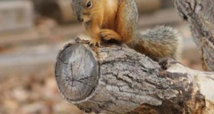 Σκίουρος γίνεται πρωταγωνιστής σε σειρά επικών φωτογραφιών με Photoshop