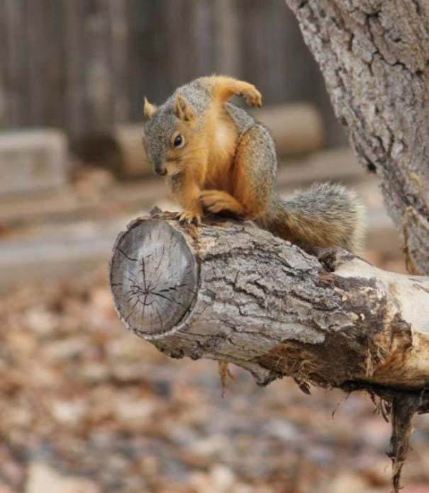 Σκίουρος γίνεται πρωταγωνιστής σε σειρά φωτογραφιών με Photoshop (1)