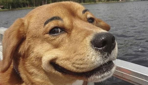 Σκύλοι με φρύδια