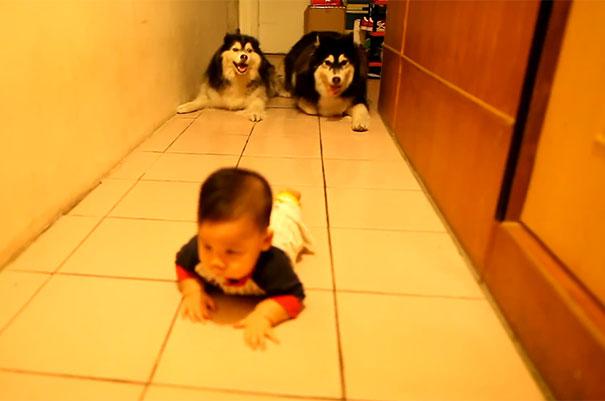 Σκύλοι μιμούνται το μπουσούλημα ενός μωρού