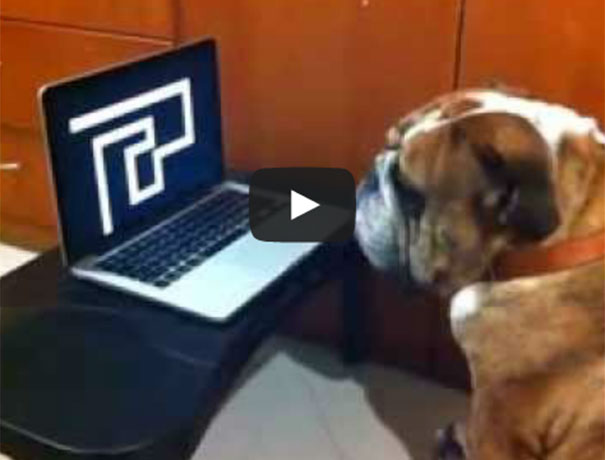 Σκύλος παρακολουθεί την τρομακτική φάρσα με τον λαβύρινθο