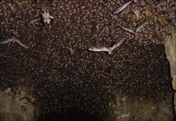 Τι υπάρχει μέσα σε αυτή τη σπηλιά; (5)