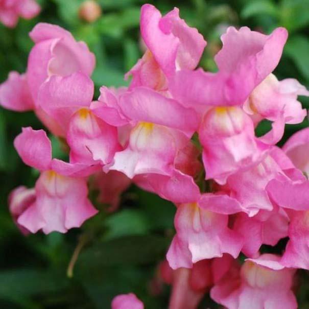 Το τρομακτικό εσωτερικό ενός όμορφου λουλουδιού (1)