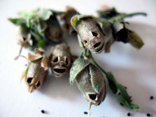 Το τρομακτικό εσωτερικό ενός όμορφου λουλουδιού (3)