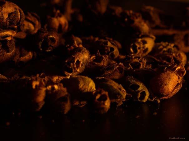 Το τρομακτικό εσωτερικό ενός όμορφου λουλουδιού (5)
