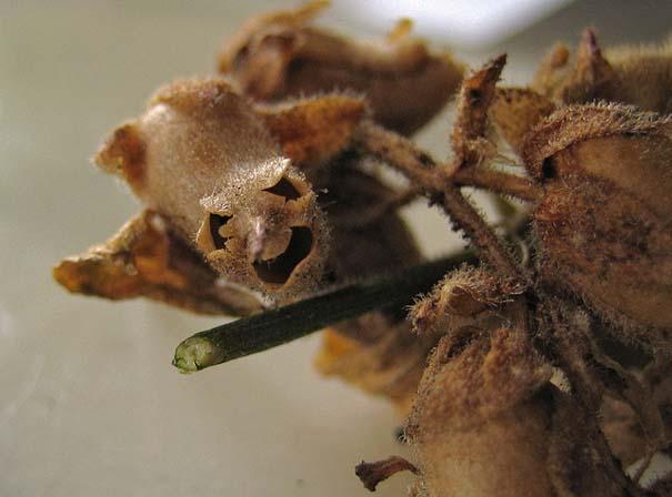 Το τρομακτικό εσωτερικό ενός όμορφου λουλουδιού (9)