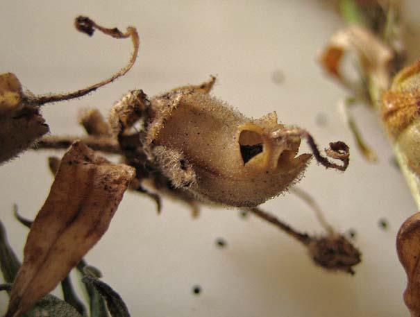 Το τρομακτικό εσωτερικό ενός όμορφου λουλουδιού (11)