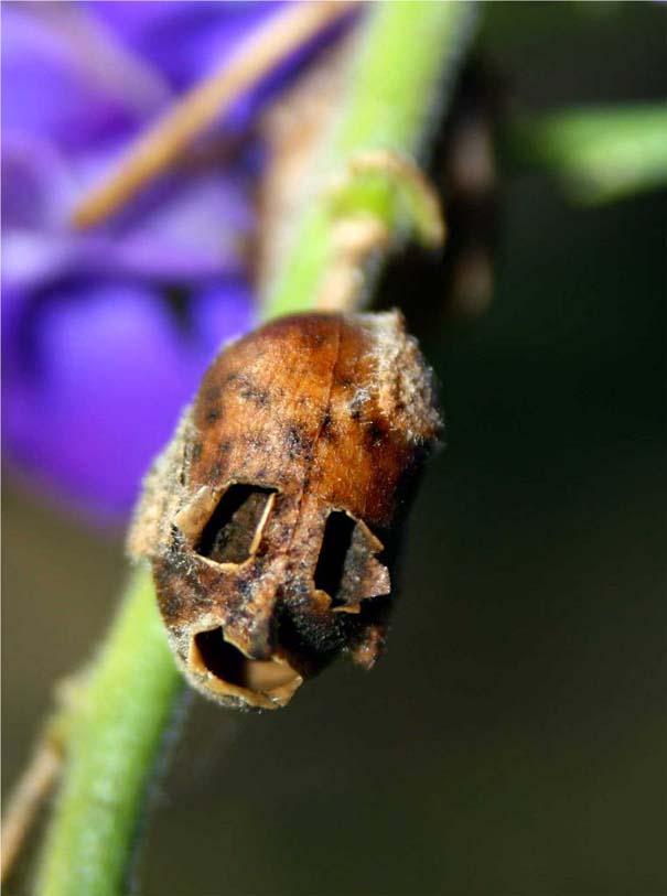 Το τρομακτικό εσωτερικό ενός όμορφου λουλουδιού (12)
