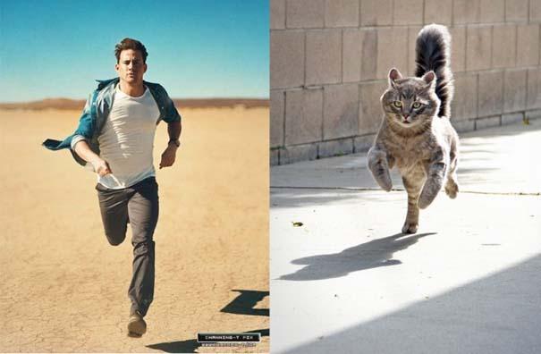 Άνδρες και γάτες στις ίδιες πόζες (1)
