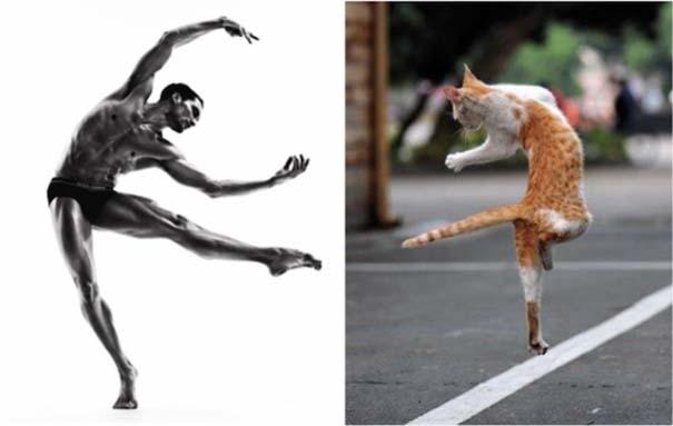 Άνδρες και γάτες στις ίδιες πόζες (4)