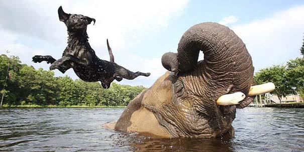 Η απίστευτη φιλία ενός ελέφαντα με ένα σκύλο (3)