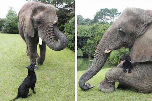 Η απίστευτη φιλία ενός ελέφαντα με ένα σκύλο (5)
