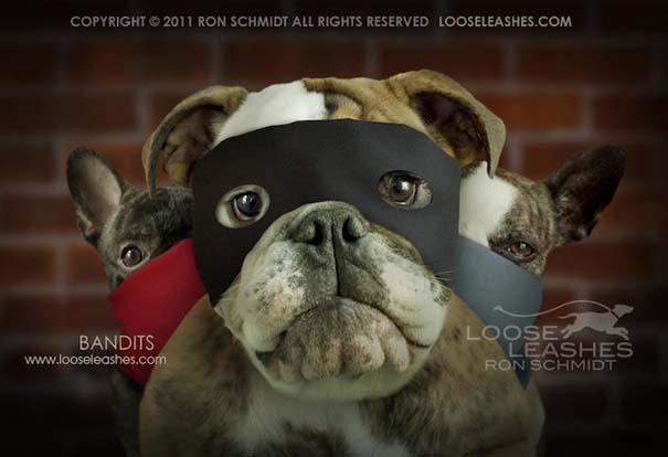 Απίθανα πορτραίτα σκύλων από τον φωτογράφο Ron Schmidt (2)