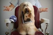 Απίθανα πορτραίτα σκύλων από τον φωτογράφο Ron Schmidt (3)