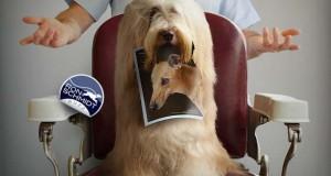 43 απίθανα πορτραίτα σκύλων από τον φωτογράφο Ron Schmidt