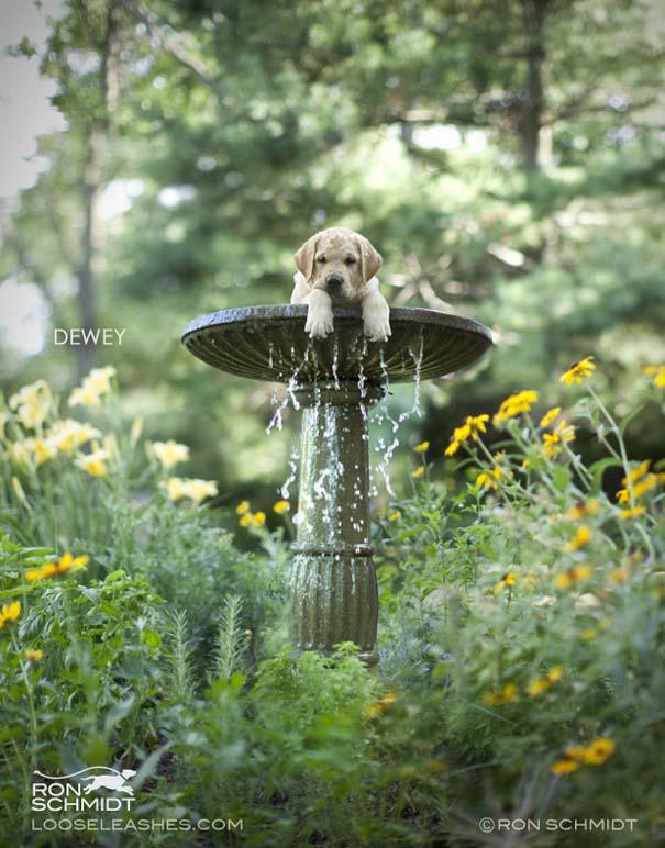 Απίθανα πορτραίτα σκύλων από τον φωτογράφο Ron Schmidt (4)