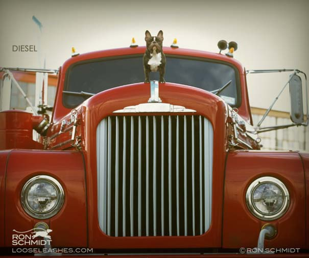 Απίθανα πορτραίτα σκύλων από τον φωτογράφο Ron Schmidt (5)