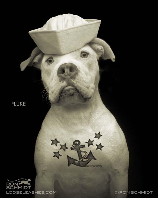Απίθανα πορτραίτα σκύλων από τον φωτογράφο Ron Schmidt (6)