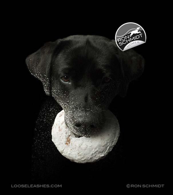 Απίθανα πορτραίτα σκύλων από τον φωτογράφο Ron Schmidt (10)