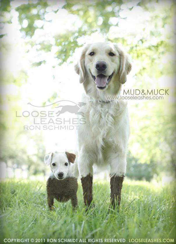 Απίθανα πορτραίτα σκύλων από τον φωτογράφο Ron Schmidt (16)