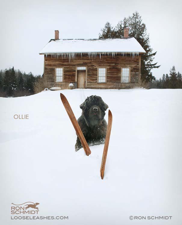 Απίθανα πορτραίτα σκύλων από τον φωτογράφο Ron Schmidt (18)