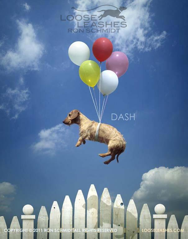 Απίθανα πορτραίτα σκύλων από τον φωτογράφο Ron Schmidt (29)