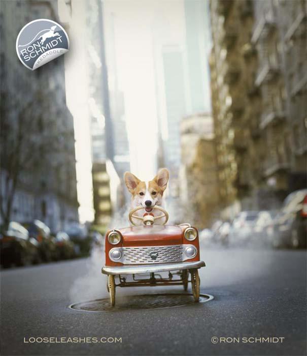 Απίθανα πορτραίτα σκύλων από τον φωτογράφο Ron Schmidt (32)