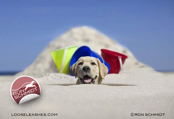 Απίθανα πορτραίτα σκύλων από τον φωτογράφο Ron Schmidt (38)