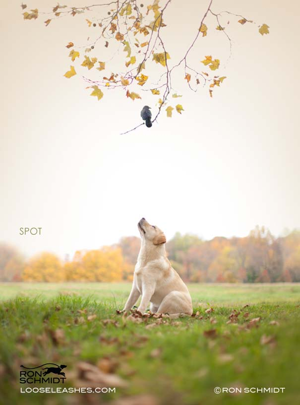 Απίθανα πορτραίτα σκύλων από τον φωτογράφο Ron Schmidt (39)