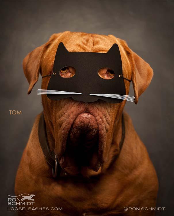 Απίθανα πορτραίτα σκύλων από τον φωτογράφο Ron Schmidt (40)