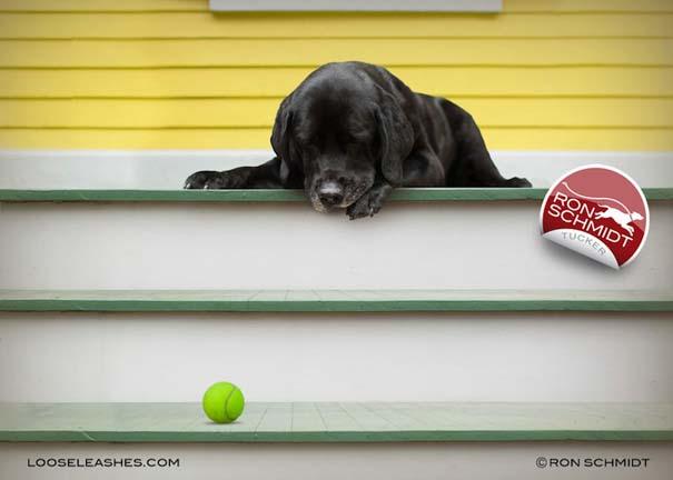 Απίθανα πορτραίτα σκύλων από τον φωτογράφο Ron Schmidt (41)