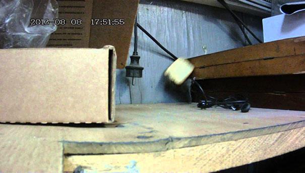 Αποφασισμένο ποντίκι κάνει τα πάντα για ένα κρακεράκι