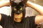 Catman (1)