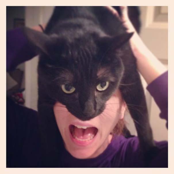 Catman (2)