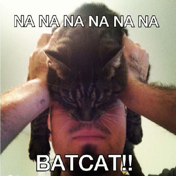 Catman (6)