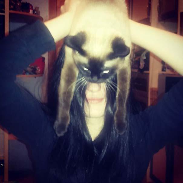 Catman (12)